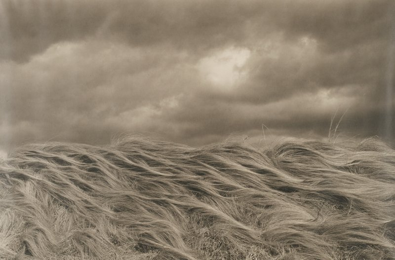 long, hair-like masses of wavy, flattened grasses; dark clouds in sky with small light patch near center of sky