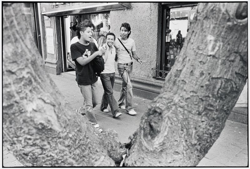 four young men wearing blue jeans, t-shirts or polo shirts and tennis shoes walking down a city street, seen between V-shaped tree limbs