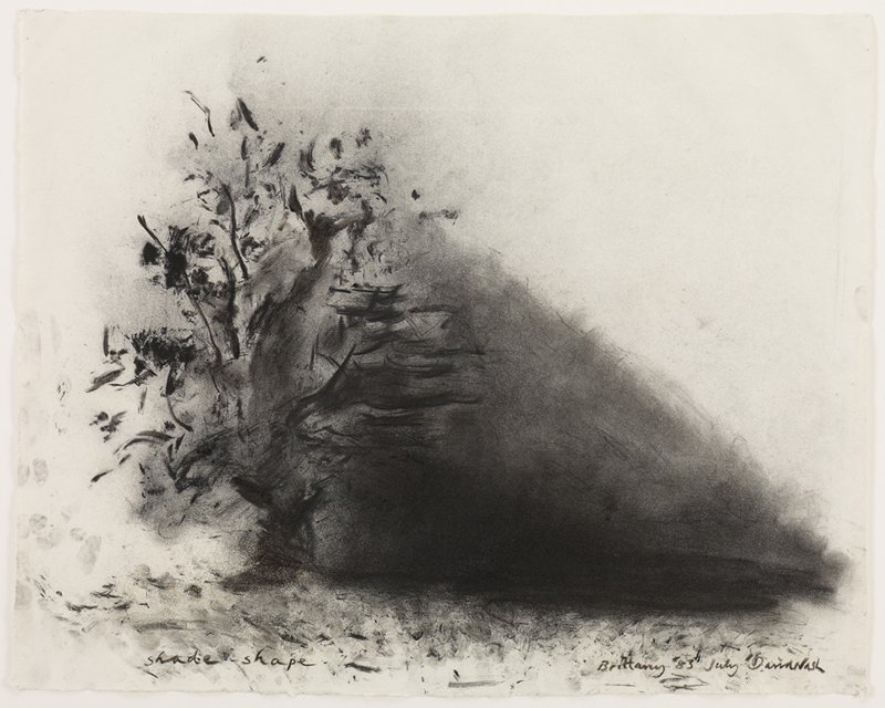 Loosely sketched charcoal drawing of tree with large shadow cast across right side; flat profile, natural hardwood frame
