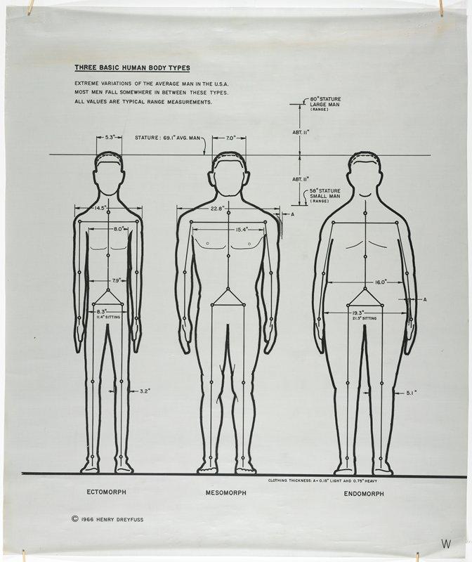 Three Basic Human Body Types Frontal Henry Dreyfuss Draftsman