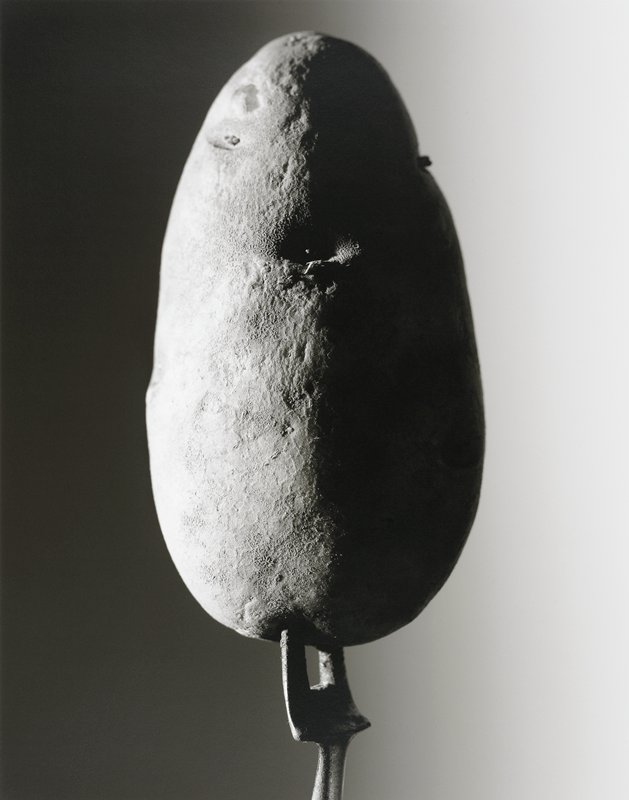 black and white image of a large egg-shaped potato on a two pronged fork lit from the left side