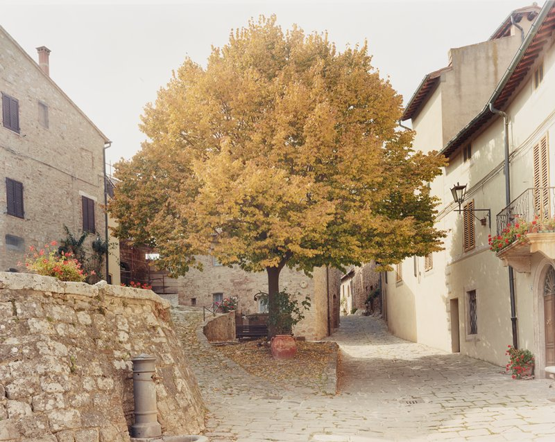 tree with leaves turning from green to gold; tree on tiny triangular patch of ground between stone streets and buildings in European village