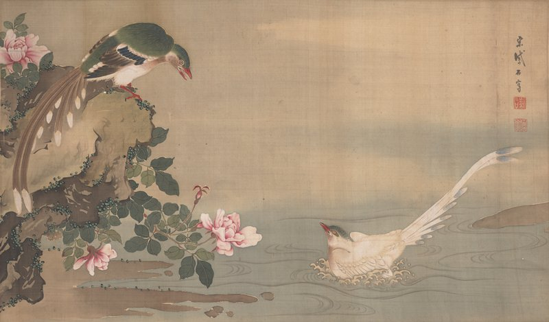 white bird with long, elegant tail and green head splashing in water at R; larger bird with green, white, and brown feathers perched on rock covered with pink roses at L