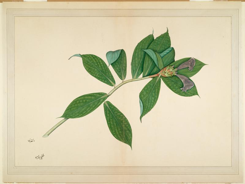 image of a branch with foliage; wood frame with a gold face