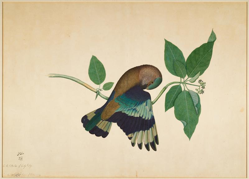 image of a green, blue and brown bird on a branch preening its wing; gold frame with glass