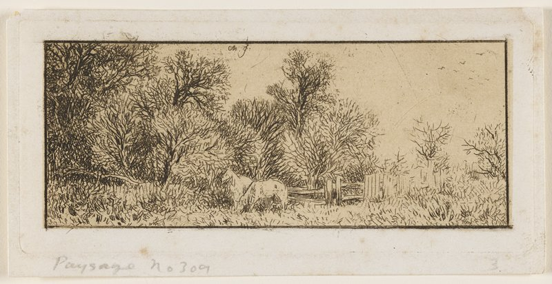 two white horses grazing in front of a fence; thick grove of trees behind at L; two smaller trees at R with higher, thin vegetation