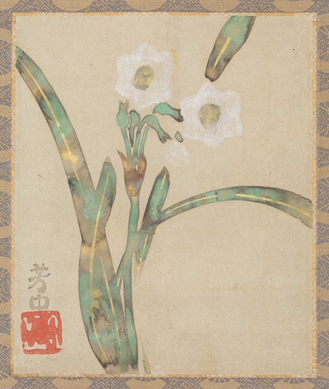 three narcissus blossoms; blade-like foliage with marbled coloring