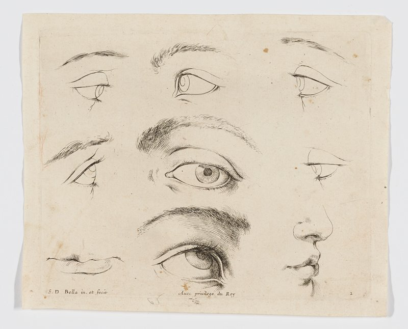 seven eyes; mouth in LLC; mouth and nose, LRC