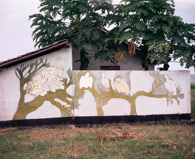 Color image of mural of a large cat and birds in a tree; grass in the foreground with a tree and building in the background