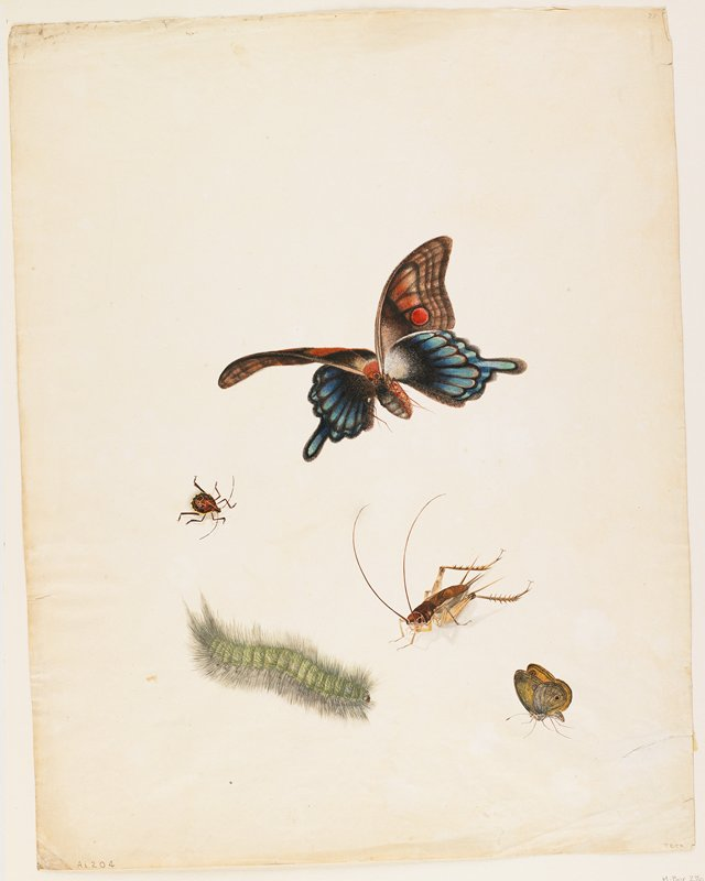 Five insects