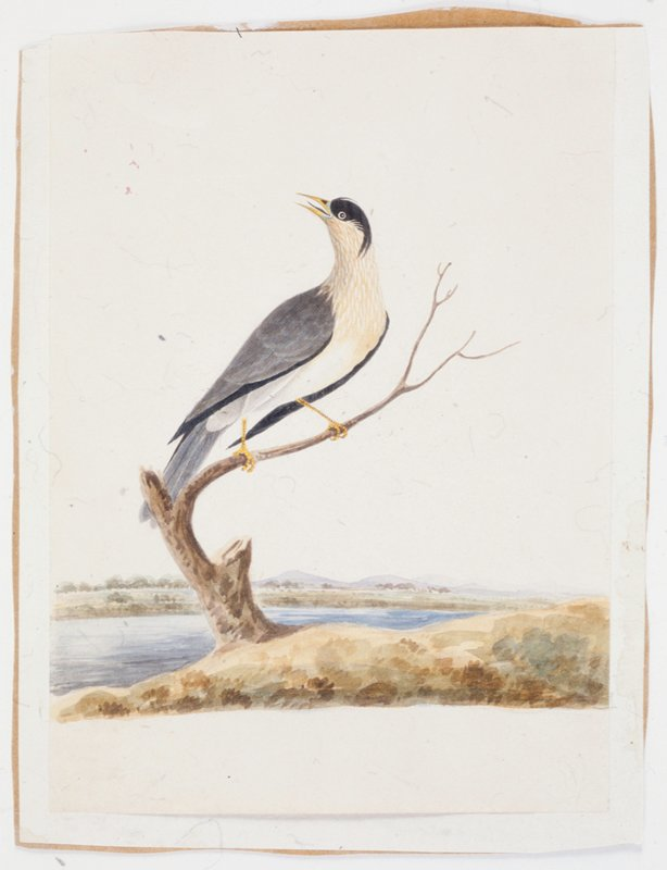 Bird perched on branch by river