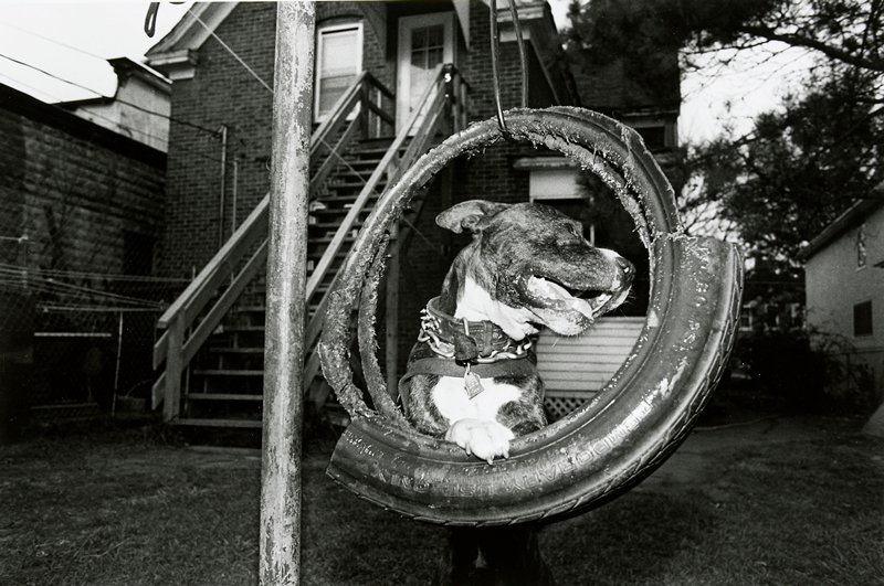 black and white photo of dog with one paw on tire swing, head turned to PL side