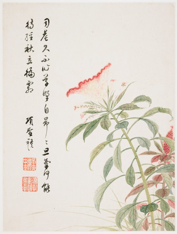 large furry-looking pink and light orange cone-shaped flower with rippled edge on a long stalk with many leaves; red bud at right edge; inscription and 2 seals at left