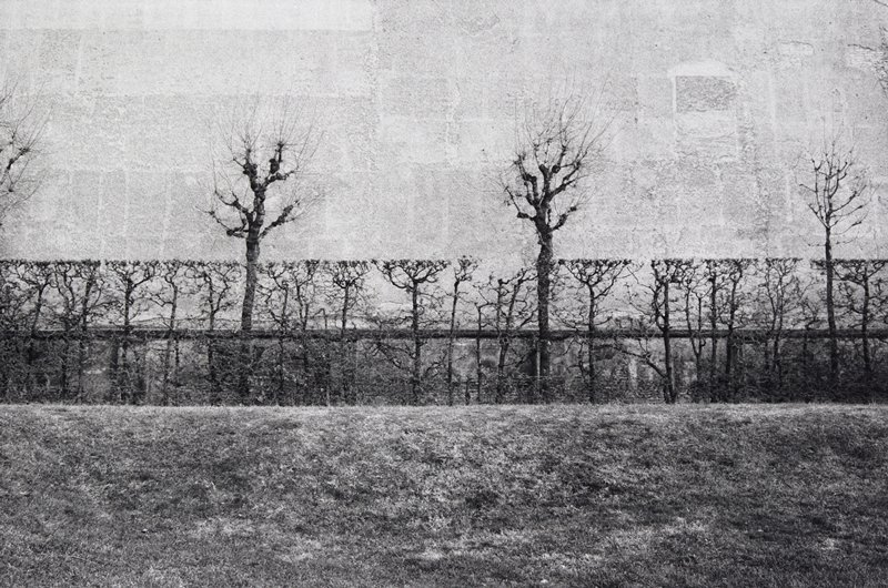 black and white photo of pruned trees in front of wall