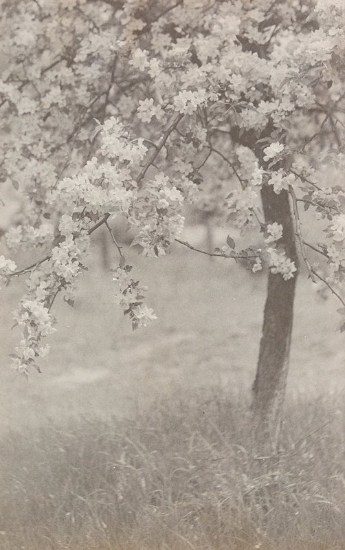 blooming tree with grasses