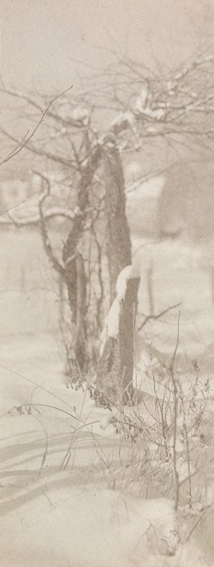 grasses in foreground; bare tree and fencepost covered with snow at center