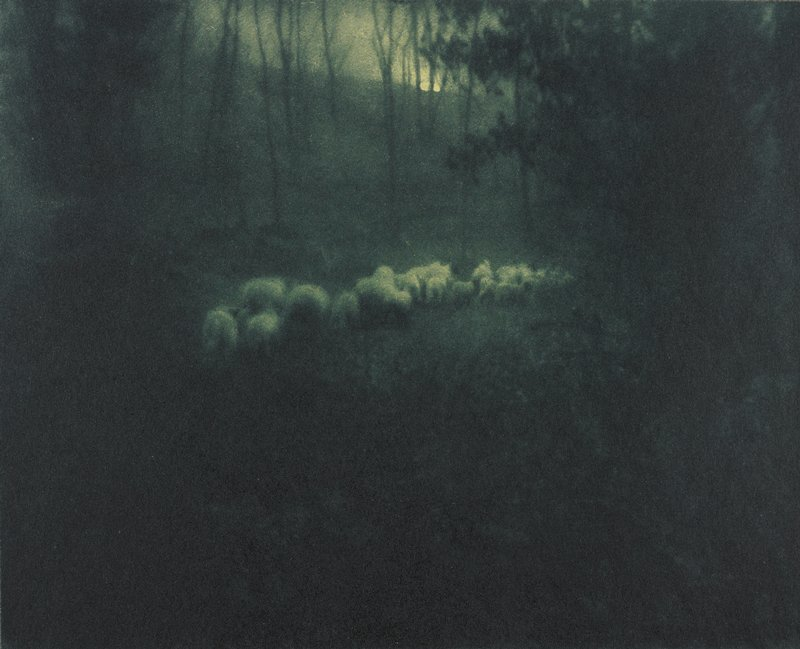 dark landscape with flock of sheep in center and silhouette of trees in background