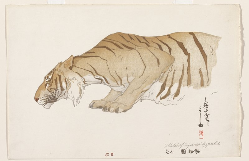 front of body of crouching, orange tiger viewed from PL side; off-white mat and light wood frame with plexi