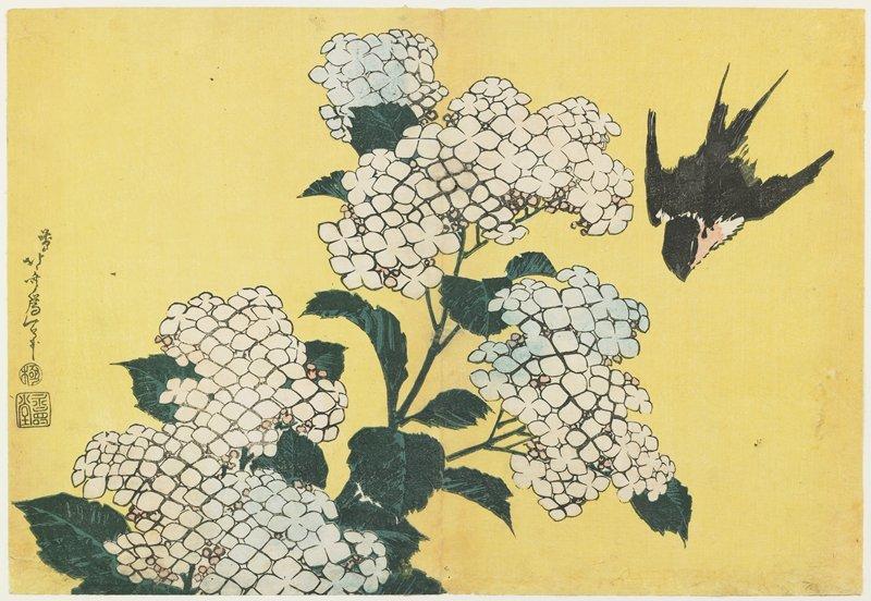 葛飾北斎『紫陽花に燕』