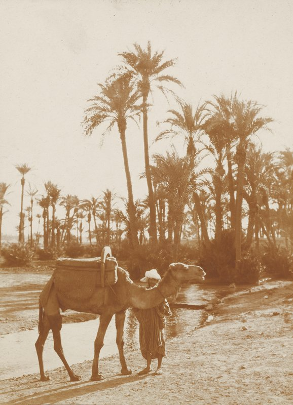 man with a camel standing near a stream; palm trees in background; Morocco