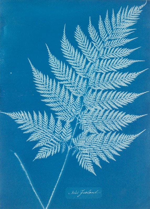 fern-like leaf frond; medium blue ground, light blue leaf frond silhouette